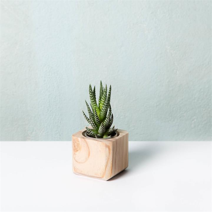 Timber Succulent Planter | The Mini
