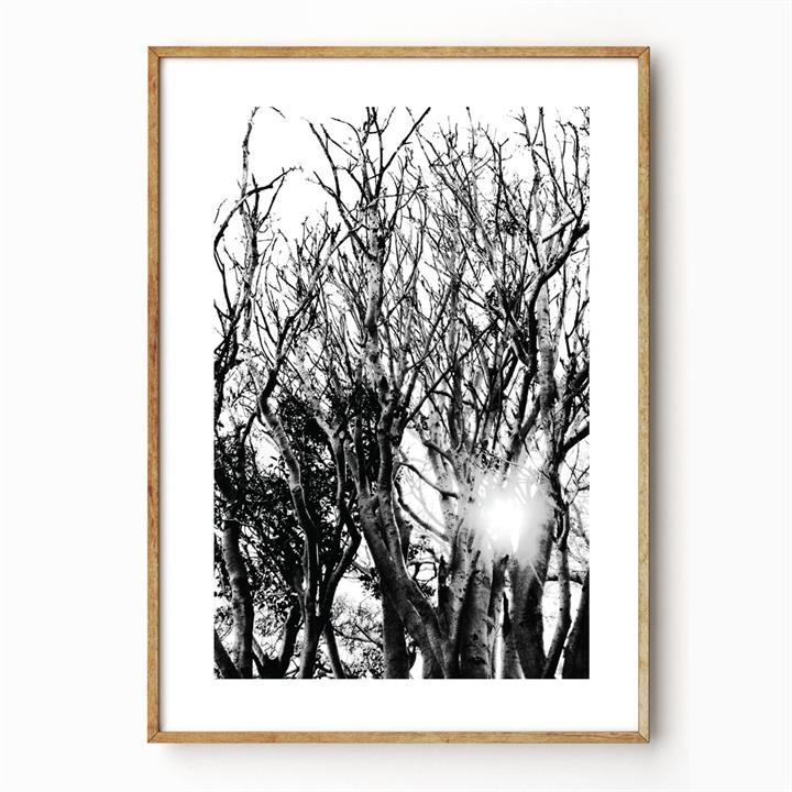 Liquid Light | Unframed Print