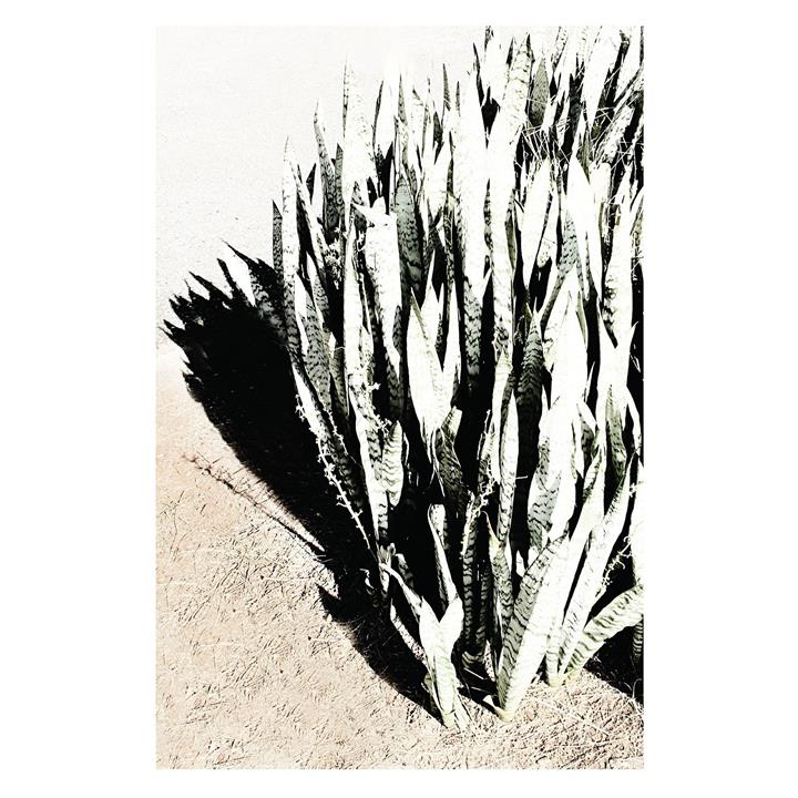 Desert Wash Print Art