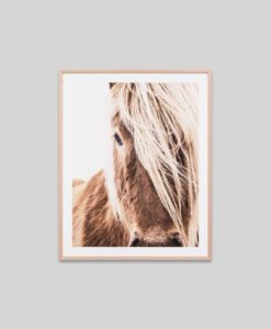 Highland Equine | Framed Photographic Print