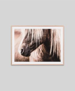 Wandering Pony | Framed Photographic Print
