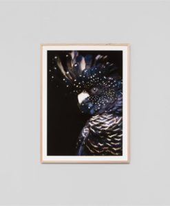 Midnight Cockatoo | Framed Print