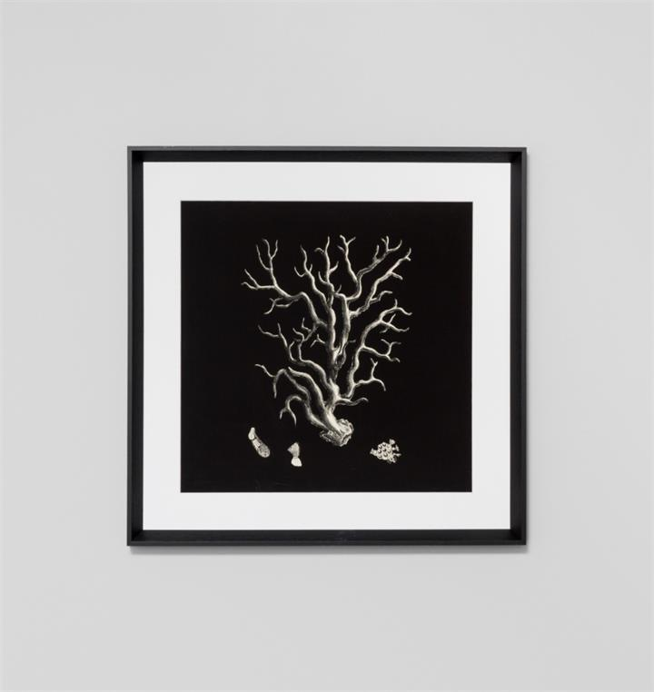 Black and Tan Coral 1 | Framed Print