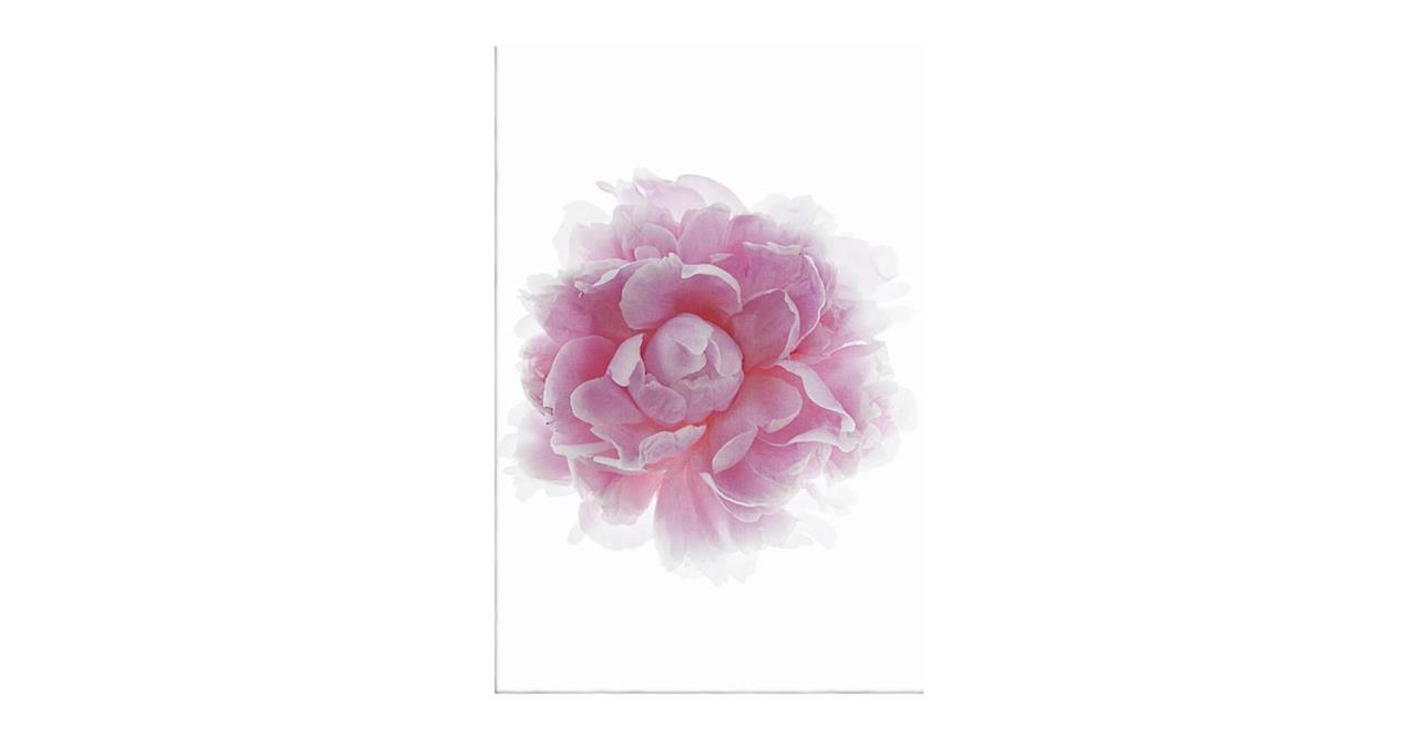 The Blossom Print Canvas Small Two