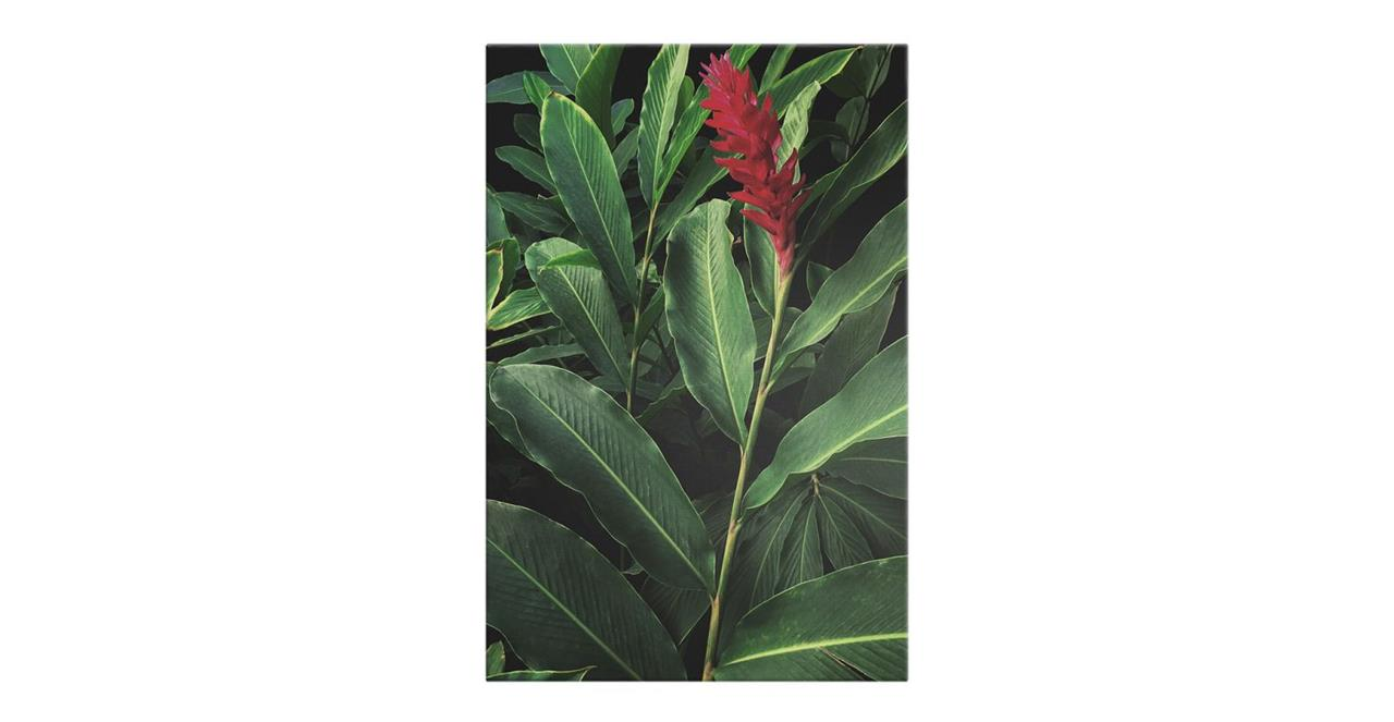 The Red Ginger Print Canvas Medium