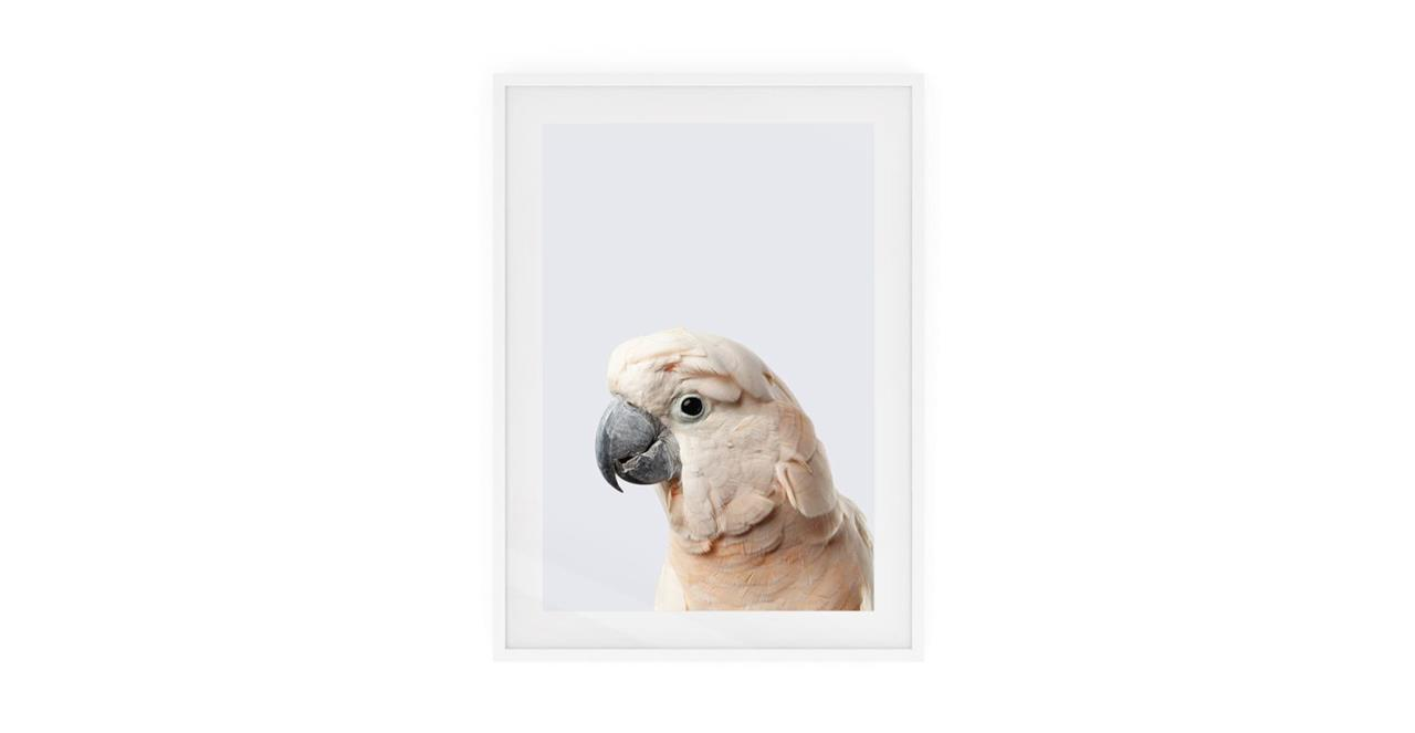 The Moluccan Cockatoo Print White Wood Frame Small