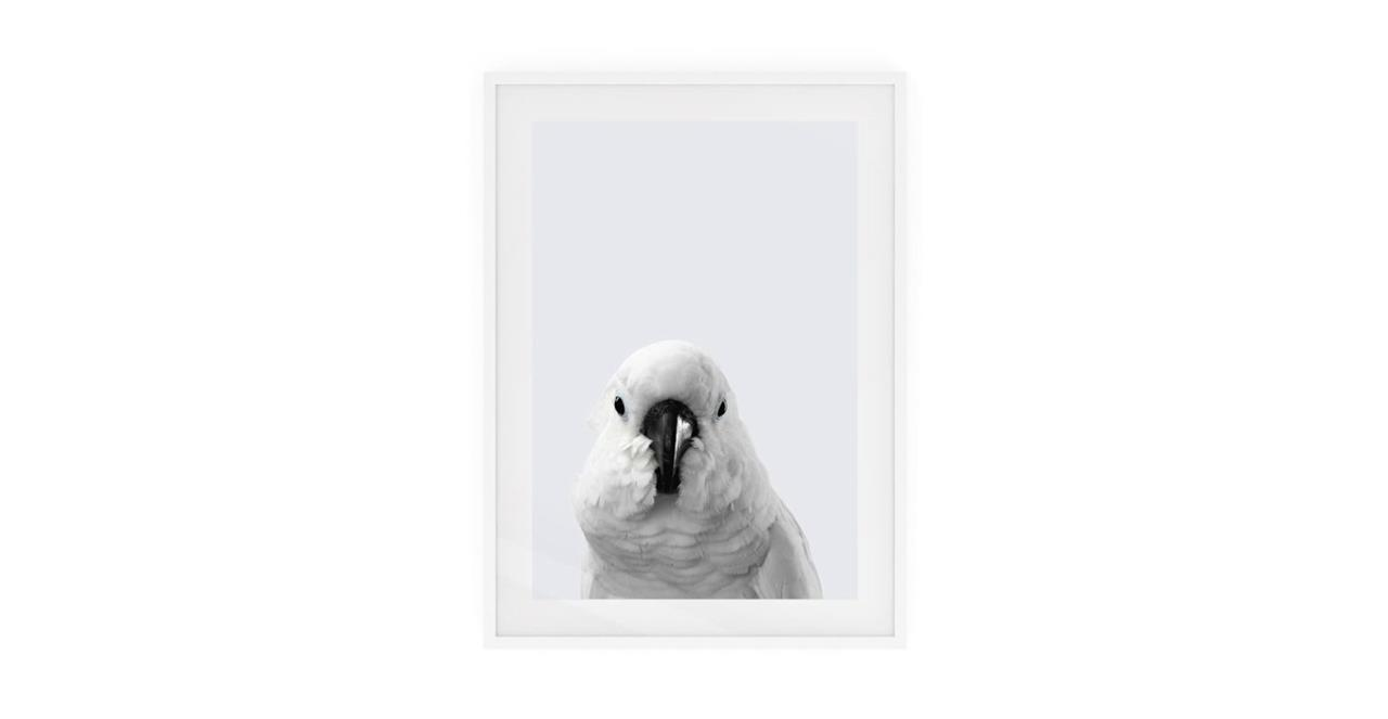 The Yellow Crested Cockatoo Print White Wood Frame Small