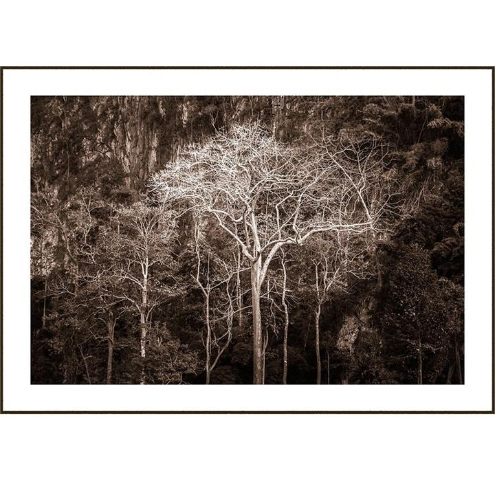 Crysiam | Glowing Forest | Framed Photographic Print or Canvas