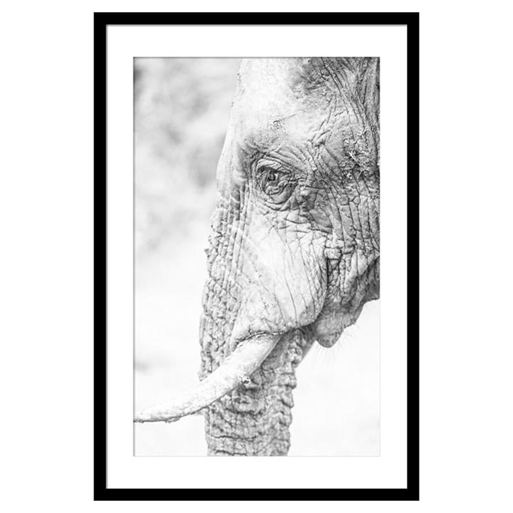 Elephant Side Framed Print