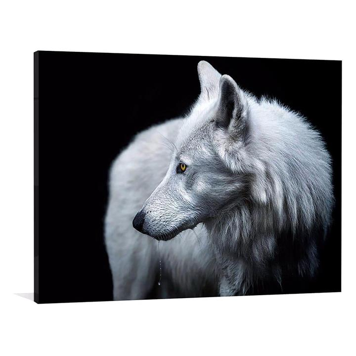 Winter is Coming Canvas Print