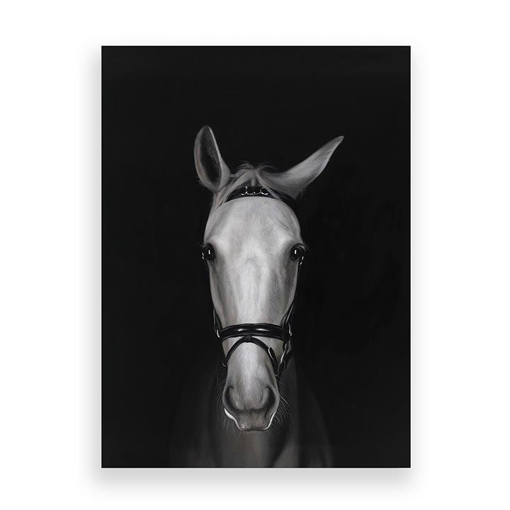 White Horse in Shadows Canvas Art
