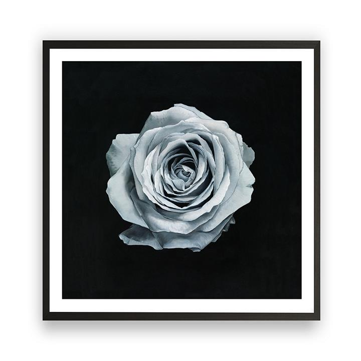 Rose Square Framed Art Print