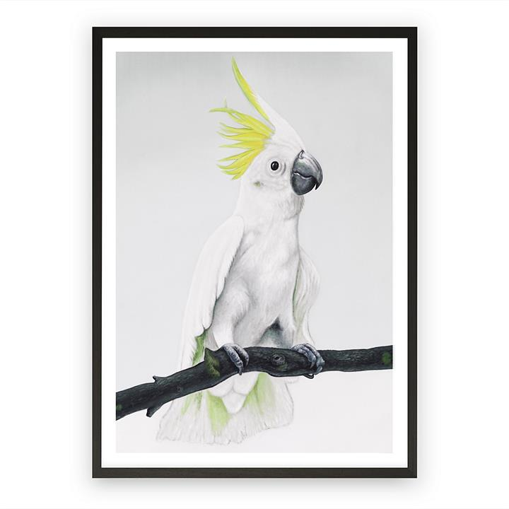 Sulfur-Crested Cockatoo Framed Art Print