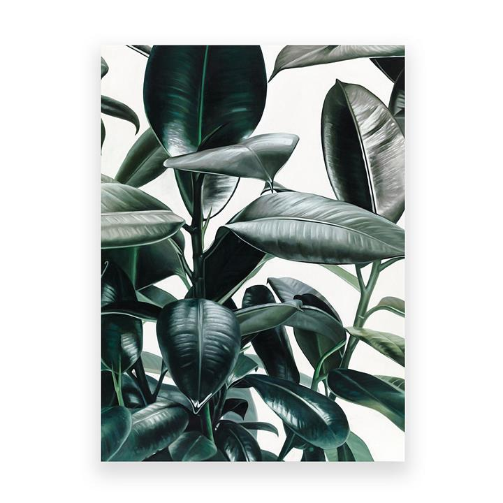 Rubber Plant Canvas Art