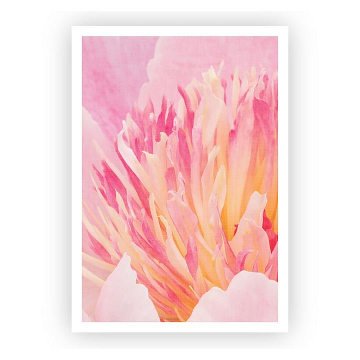 Peony Up Close Art Print