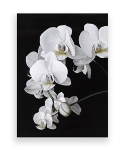 Orchid Canvas Art