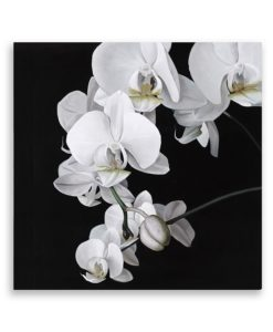 Orchid Square Canvas Art