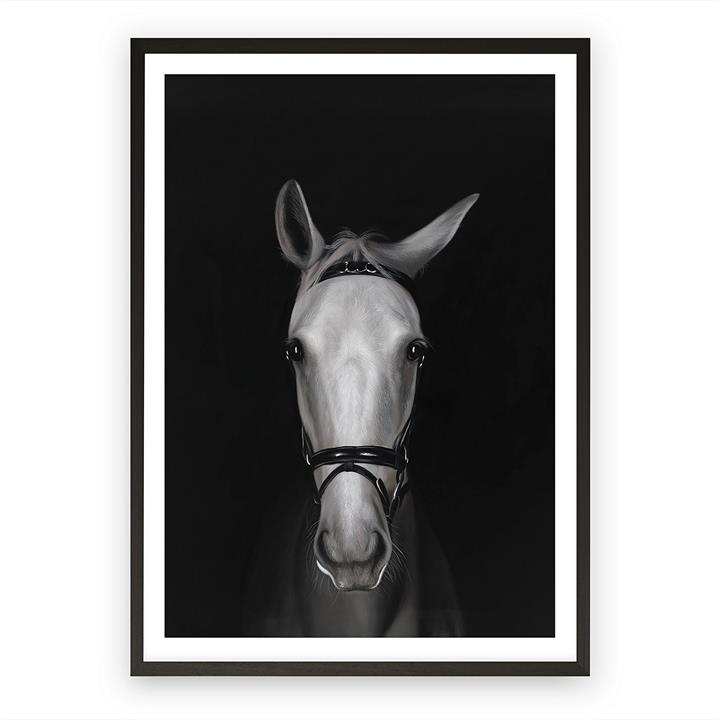 White Horse in Shadows Framed Art Print