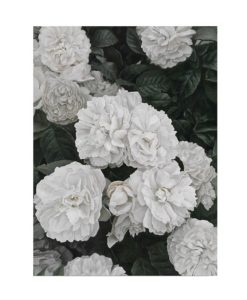 English Roses Canvas Art