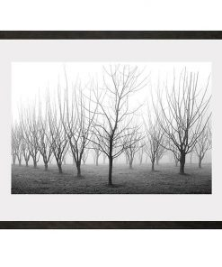 Winter Orchard | Limited Edition Fine Art Photograph