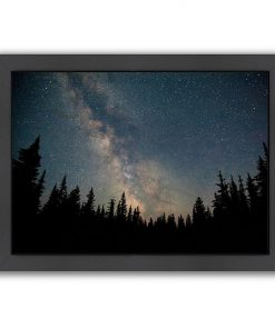 Stars over the Forest I Print Art
