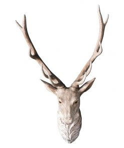 Archie Stag Head