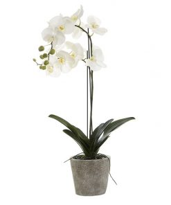 Artificial Orchid in Clay Pot