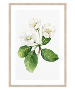 White Floral #2 Framed Wall Art