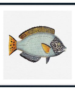 Tropical Fish Collection #6 Wall Art