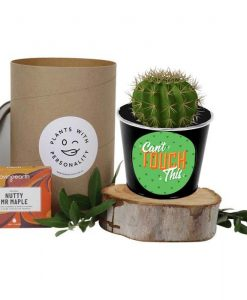Can't Touch This Cactus Hamper