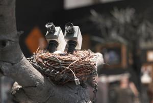 Baby CCTV Nest - Banksy