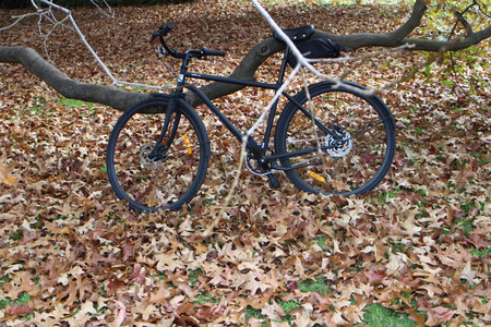 Bicycle in park with lots of fallen leaves