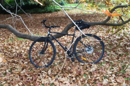 Tree branch and a bicycle in park with lots of fallen leaves