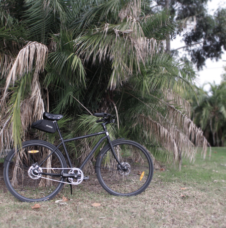 Bicycle next to a palm tree
