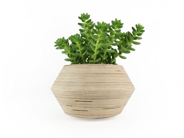 Mr & Mrs Wobble by Power to Make - Plant, Plant Pot, Pot, Timber