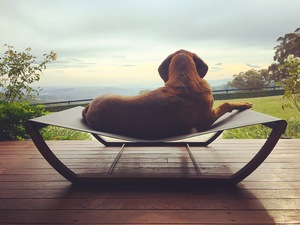 Jazz - dog hammock by Liz Bowtell - Dog Bed, Dog Hammock, Pet Furniture, Bed, Seat, Furniture