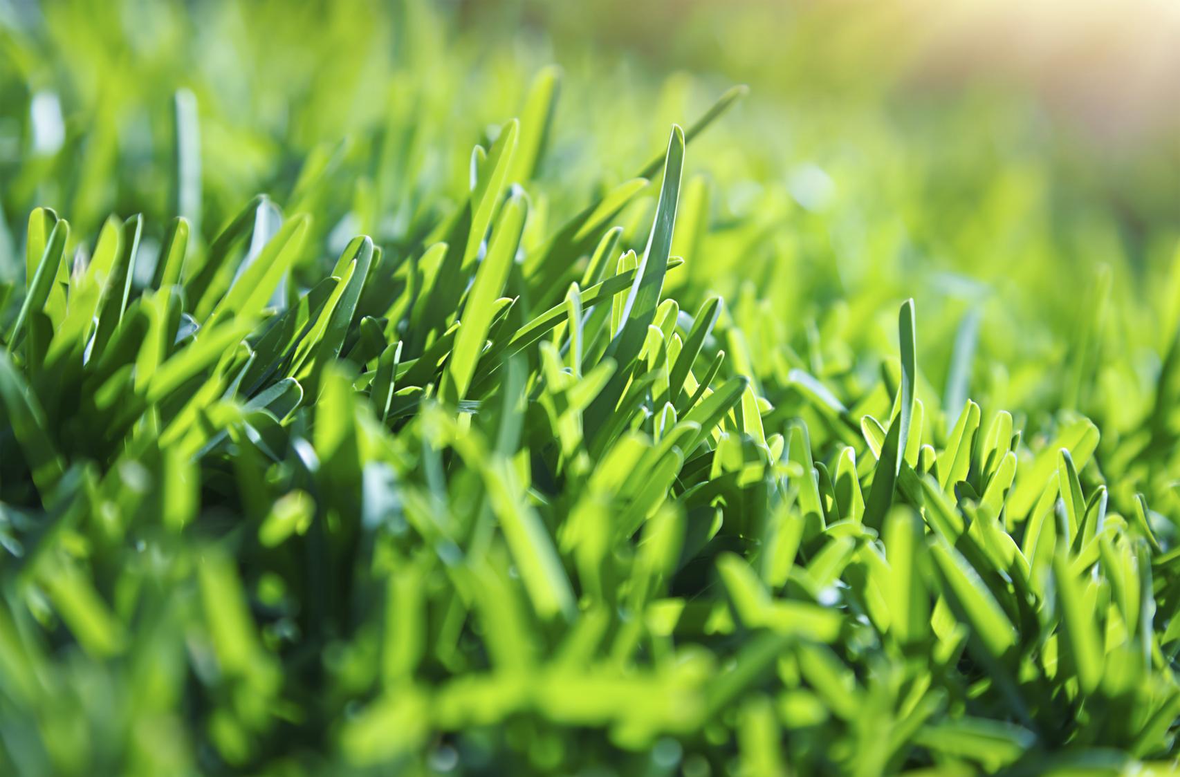 bright green blades of grass
