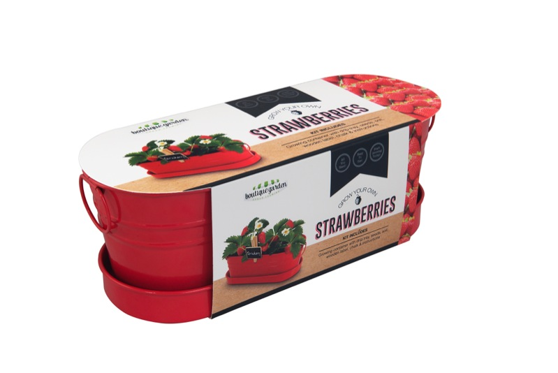 Strawberry Windowsill Tin