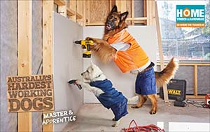 Dogs drilling walls