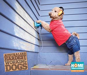 Dog sanding