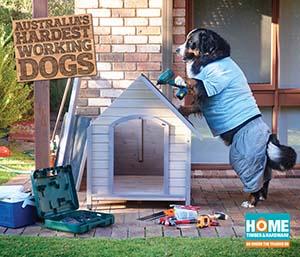Dog building dog house