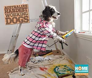 Dog Handyman