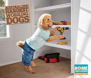 Dog Installing Cupboard