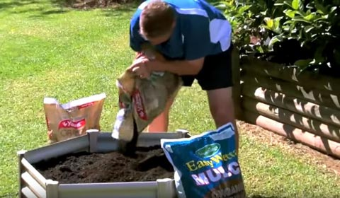 Plant your vegetable seedlings