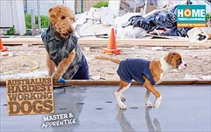 Dogs concreting