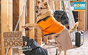 Dogs carpenting