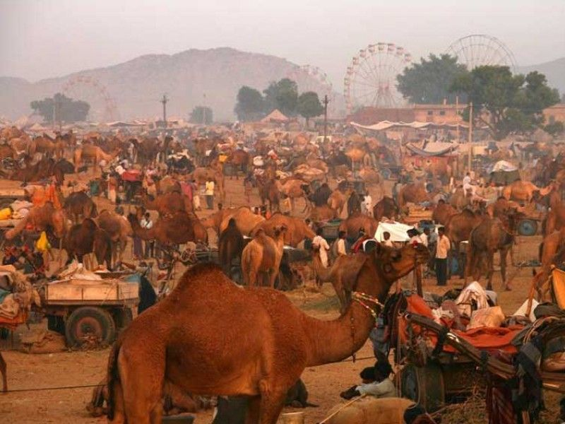 illustration of Pushkar Camel Fair #3