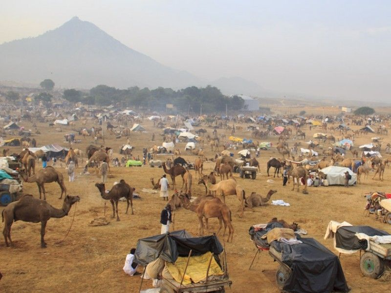 illustration of Pushkar Camel Fair #2