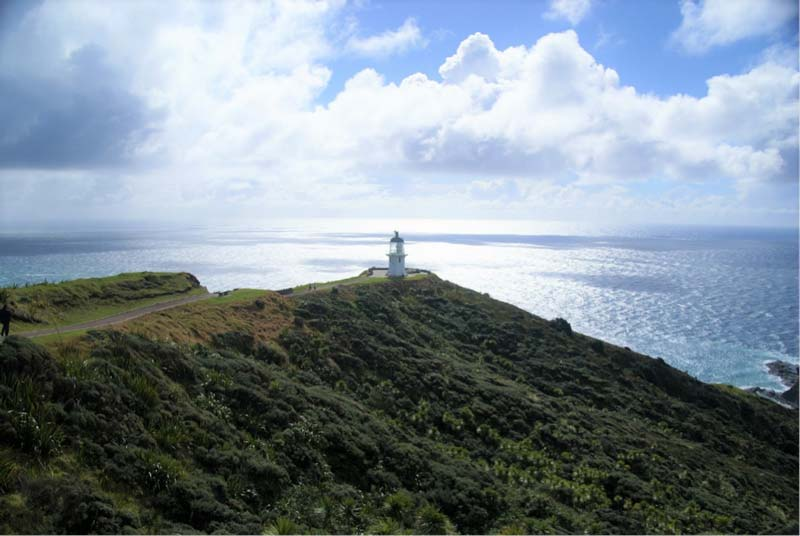 Cape Regina New Zealand, best reached with a hired campervan