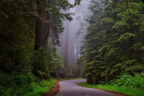 Redwoods in northern california - a great RV road trip